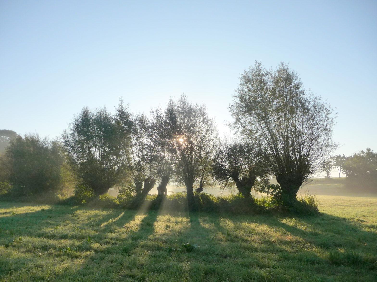 Morgenlandschaft in der Umgebung-von-Rittergut Jahnishausen